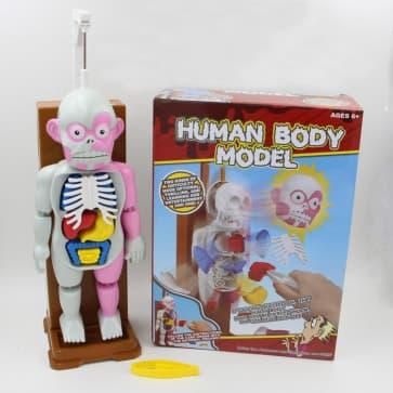 3D Puzzle Human Body Organ Model